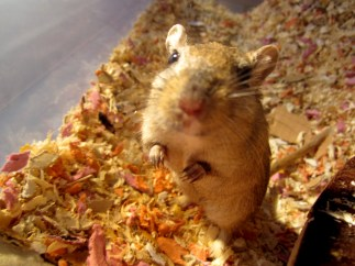 Oh, hai! You has food? ;)