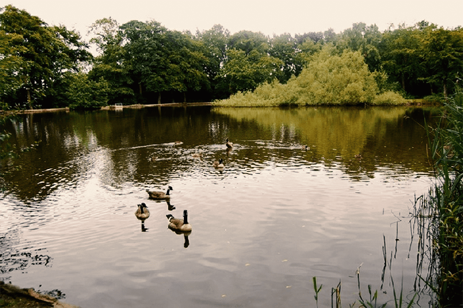 Woodhall Lake Leeds Nature Area