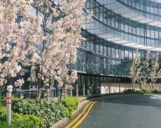 sharon-tse-ziff-building-in-the-spring