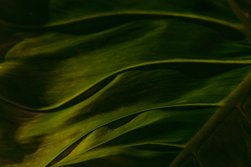 macro floral photography green leaf nature art
