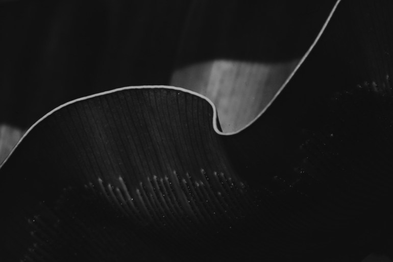 black and white macro floral photography design fine art