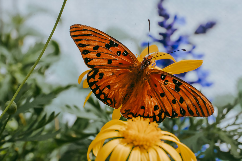 butterfly at the botanical garden photography