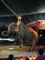 Kelly Miller Circus in Empire