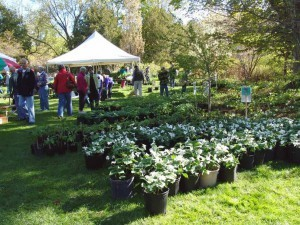 Conservancy-Leland-Village-Green-Plant-Sale