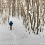The Best Cross-Country Skiing Trails in Leelanau County