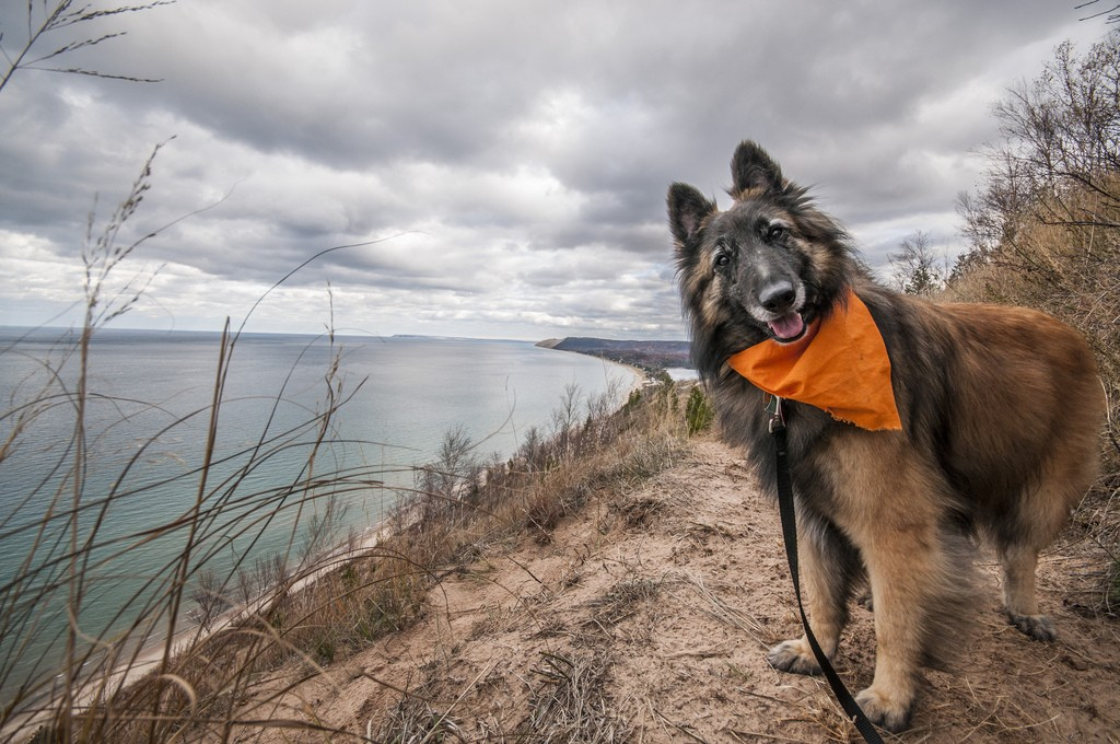 Sleeping Bear Dunes Bark Rangers REPORT!