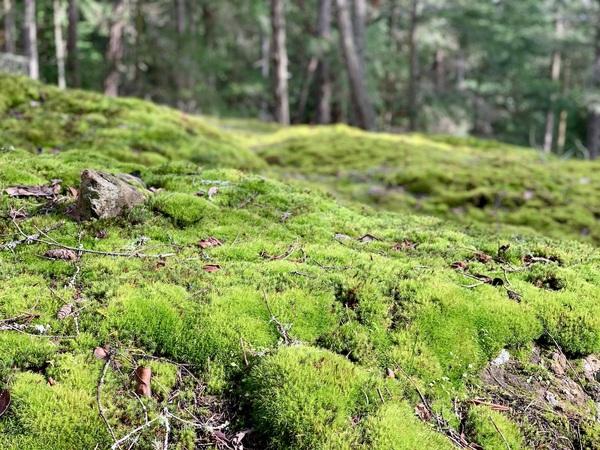 brushy forest