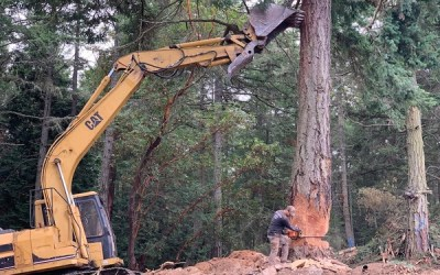 Removing and Using Big Trees 🌲🔥