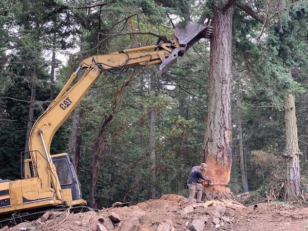 excavator holds the tree