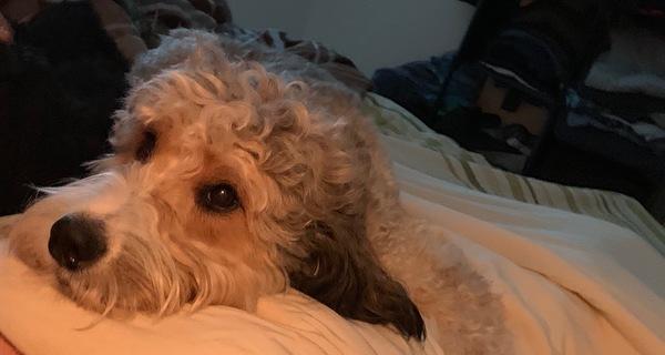our older dog