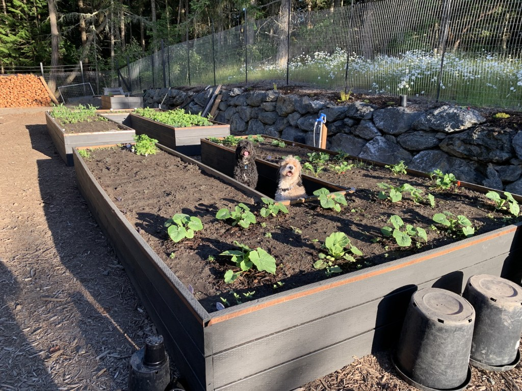 dogs with raised bed
