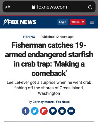 fox news story about sea star