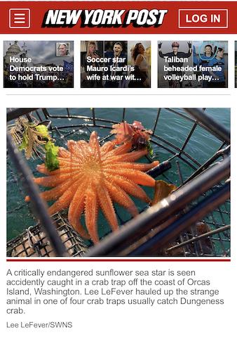 new york post sea star