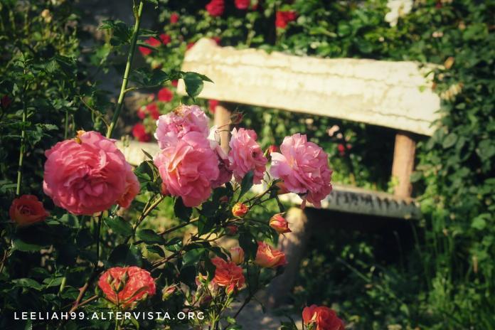 Rose di maggio al Parco di San Giovanni a Trieste © leeliah99.altervista.org