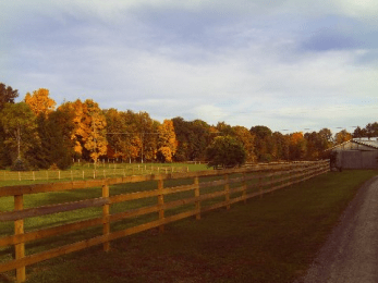 fall stable