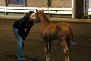 linda-foal