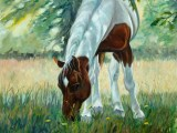 A more informal oil on panel horse portrait of a pinto, titled Dandelion Slayer, by Lee Mims.