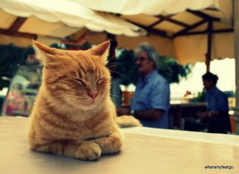 cat sitting on the counter at an outdoor cafe. Barrakka Gardens in Valletta.