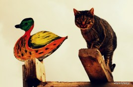 a cat perched on a wooden plank next to a wooden cut out of a duck.
