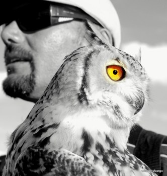 a black and white photo of Lina the owl and her human,