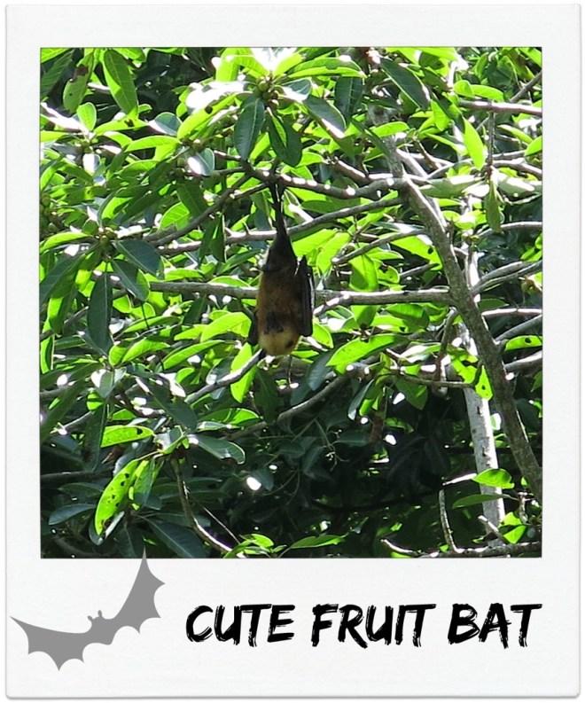 seychellen-cutefruit-bats