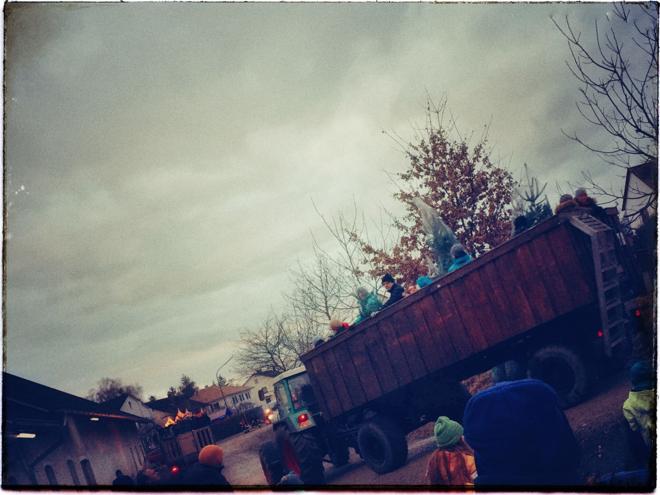 weihnachtsbaum-selber-schlagen-traktoranhaenger-mit-christbaeumen