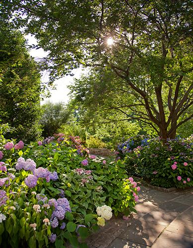 Hydrangeas near entrance to mansion
