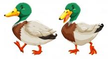 deux canards