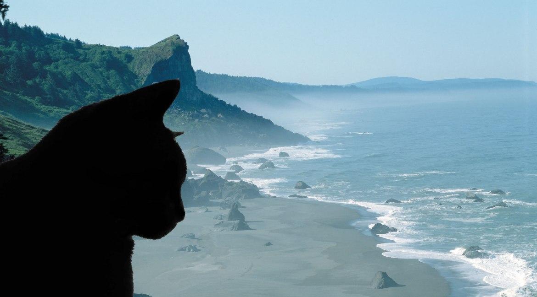 coastal cat