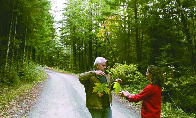 redwoods-road-650