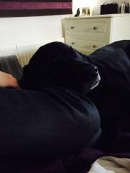 Jasper-Black-Labrador-Family.5