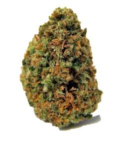 gods gift weed strain