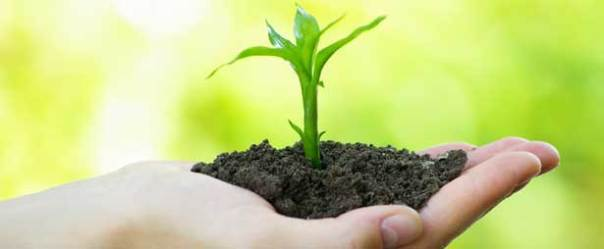 Environmental-Lawyer-Services-Delhi