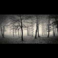 Ln_tree (16)