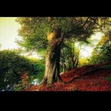 Ln_tree (20)