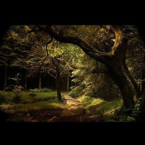Ln_tree (5)