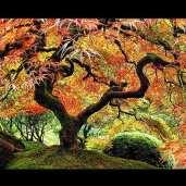 Ln_tree (6)