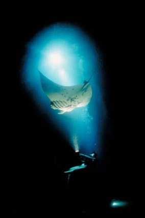 Diver Watches Manta Ray HI