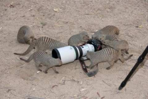 fotografo animali