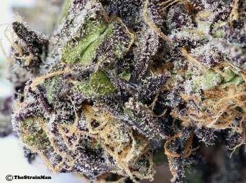 PurpleSkywalker