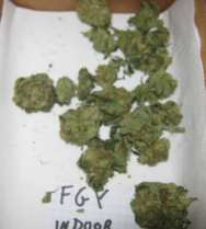 FGY_snow_fruit