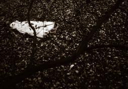 Melanie-Pullen_Renees-Tree