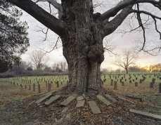asylum-book-CVH-Cemetery