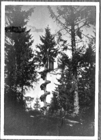 albero-vedetta