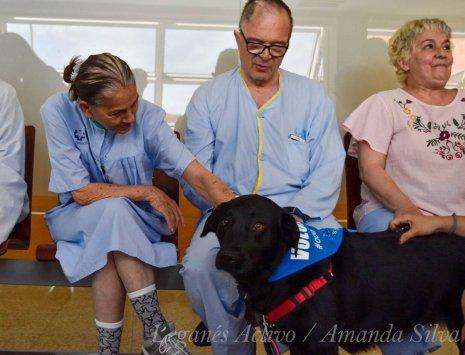 Perros y pacientes en el Hospital Severo Ochoa. Foto: Amanda Silva