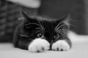 kitten_5