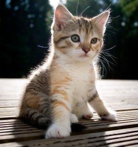kitten_8