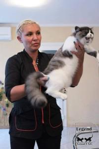 Грумингованый кот