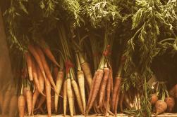Kitchen Still Life: Carrots