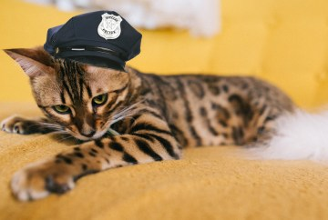 alberte policiere